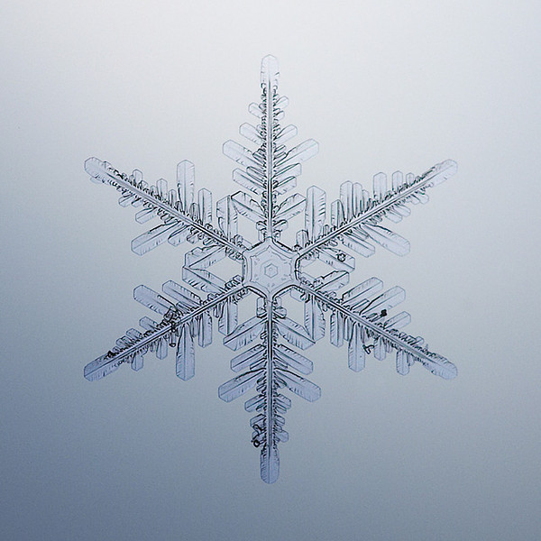 "Unframed Print: Snowflake 8915 - $25  Framed Print: Snowflake 8915 - $50  Blank Greeting Card: Snowflake 8915 - $3  Please click here to order: <a href=""mailto:ajstudio@alaska.com?subject=ATTENTION: SNOWFLAKE ORDER"">ajstudio@alaska.com</a>"