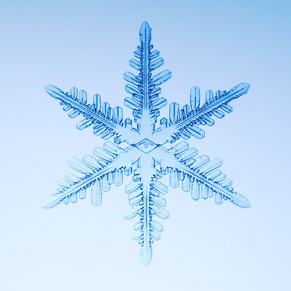 """Unframed Print: Snowflake 8893 - $25  Framed Print: Snowflake 8893 - $50  Blank Greeting Card: Snowflake 8893 - $3  Please click here to order: <a href=""""mailto:ajstudio@alaska.com?subject=ATTENTION: SNOWFLAKE ORDER"""">ajstudio@alaska.com</a>"""