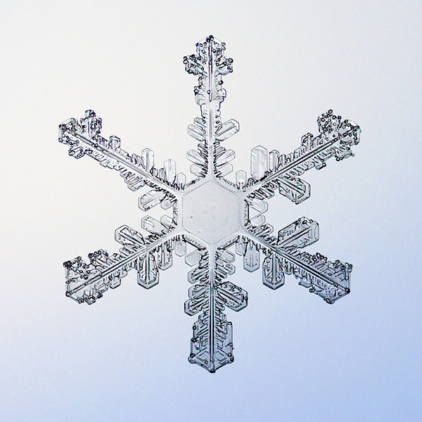 """Unframed Print: Snowflake 8645 - $25  Framed Print: Snowflake 8645 - $50  Blank Greeting Card: Snowflake 8645 - $3  Please click here to order: <a href=""""mailto:ajstudio@alaska.com?subject=ATTENTION: SNOWFLAKE ORDER"""">ajstudio@alaska.com</a>"""