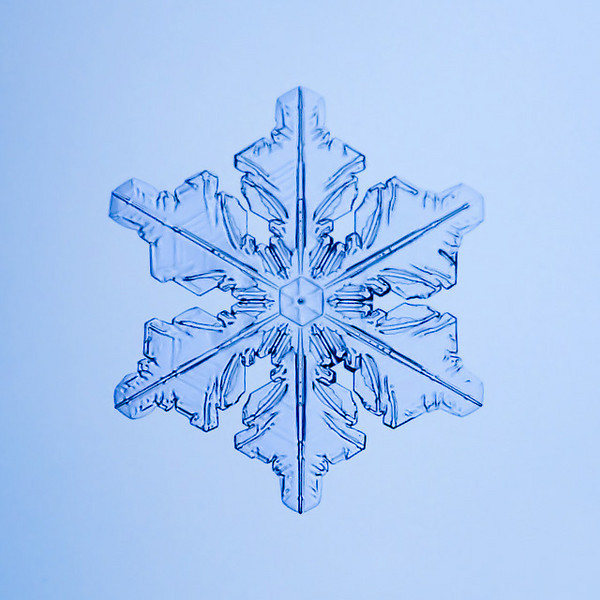 "Unframed Print: Snowflake 9516 - $25  Framed Print: Snowflake 9516 - $50  Blank Greeting Card: Snowflake 9516 - $3  Please click here to order: <a href=""mailto:ajstudio@alaska.com?subject=ATTENTION: SNOWFLAKE ORDER"">ajstudio@alaska.com</a>"