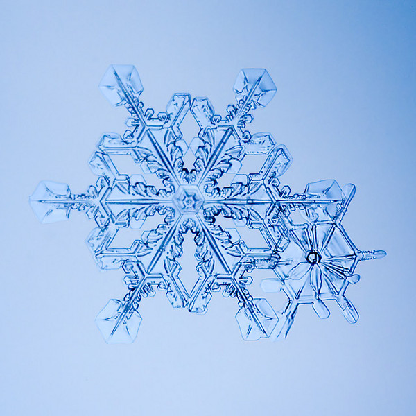 """Unframed Print: Snowflake 9498 - $25  Framed Print: Snowflake 9498 - $50  Blank Greeting Card: Snowflake 9498 - $3  Please click here to order: <a href=""""mailto:ajstudio@alaska.com?subject=ATTENTION: SNOWFLAKE ORDER"""">ajstudio@alaska.com</a>"""