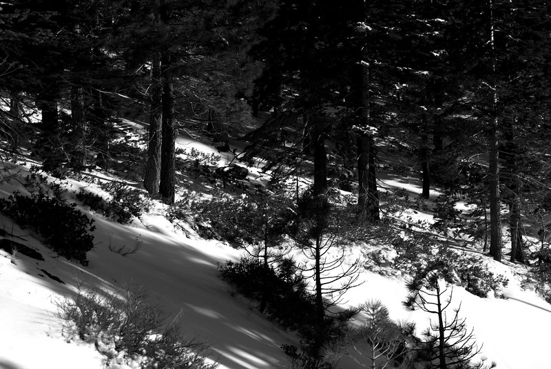 Shade & Snow