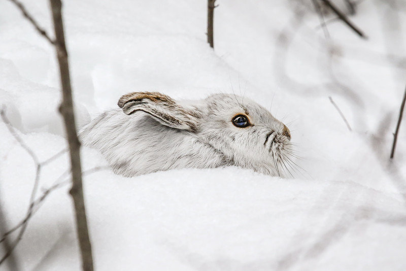 Winter Camouflage   2
