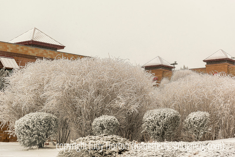 Hoarfrost on Shrubs and Grasses