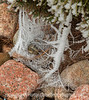 Spider Webs with Hoarfrost