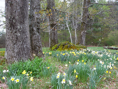 Spring has arrived here in Vermont.  This pic in Arlington, on the grounds of a private property that I am the gardener for during the spring through the fall.