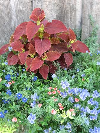 Container Garden, July 2006, Shaftsbury, Vermont.