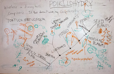 Brent's whiteboard work for the newbie lecture.