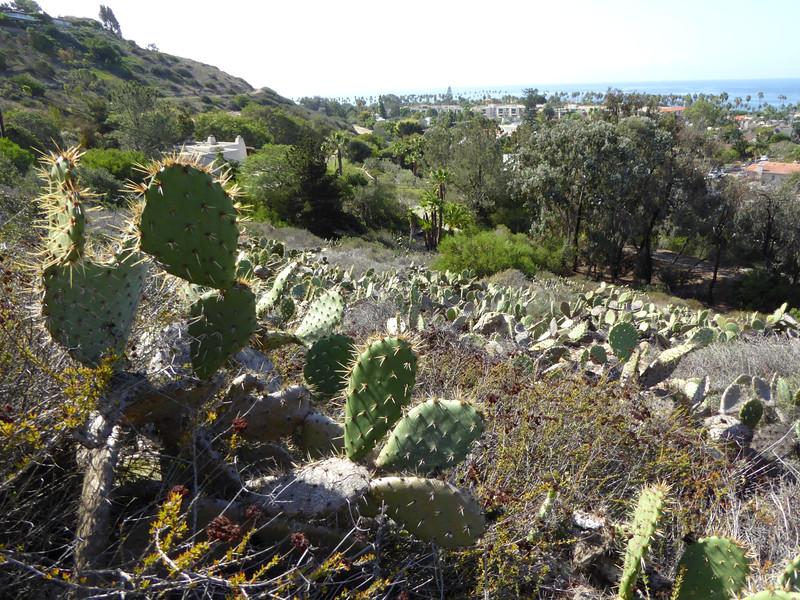 Cacti on hill Hike on Bikepath 151020