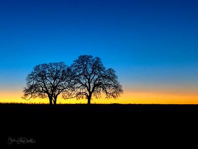 Twilight-Trees-156