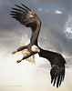 SWOOPING EAGLE SKY VERTICLE171217