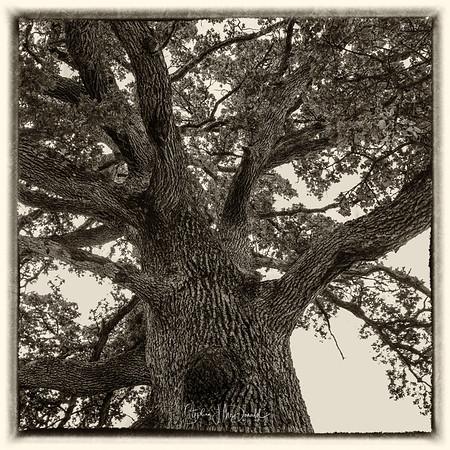 Kellys_Tree_060918-25-Edit-3
