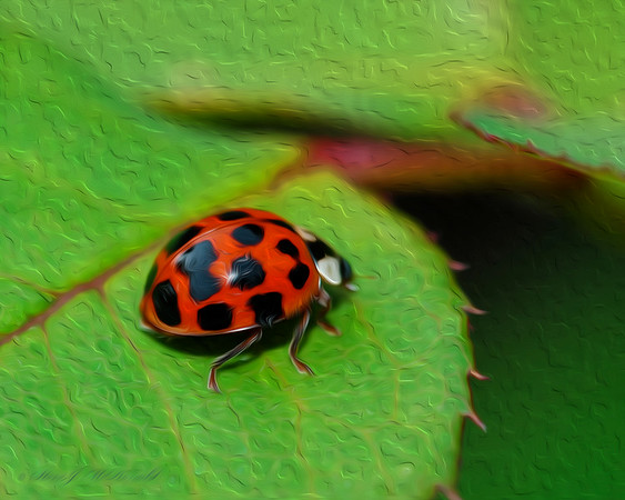 OIL_Lady Bug