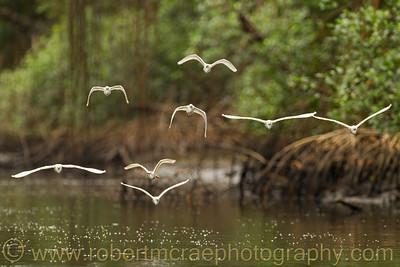 """Flying Through the Marsh"""