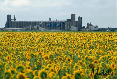 Riceland Plant in Stuttgart, AR