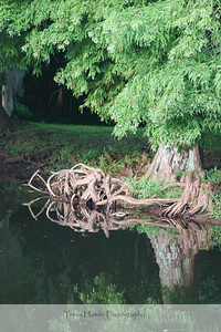 roots - just before an afternoon thunderstorm
