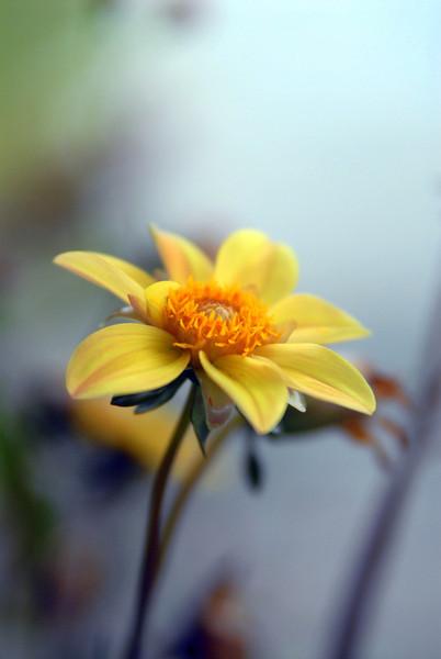 The Carolinas - Flora and Fauna