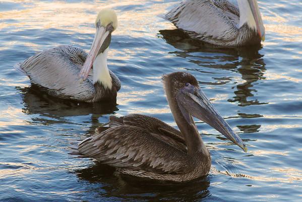 South Florida Wildlife Shots - December 2012