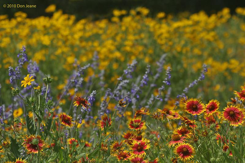 Roadside wildflowers, 5/7/2010.