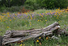 Wildflowers, 5/3/2010.