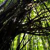Beneath the Bamboo Curtain
