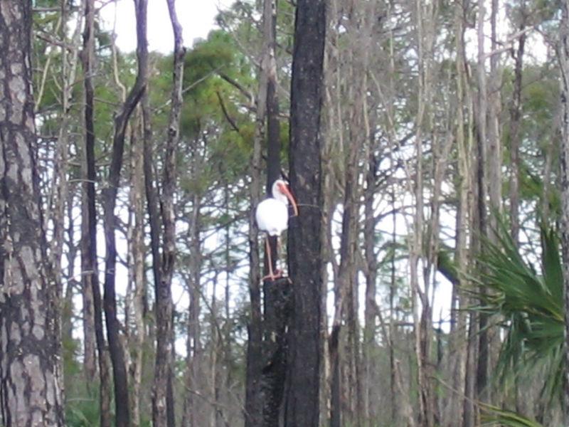 2005_11_05_Nature around SWF & FGCU-108