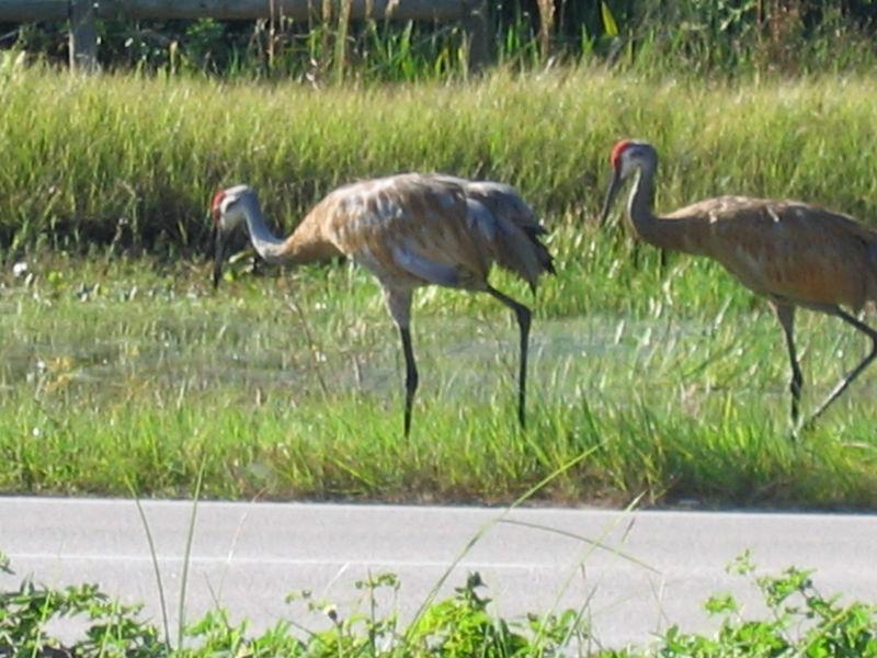 2005_11_05_Nature around SWF & FGCU-90