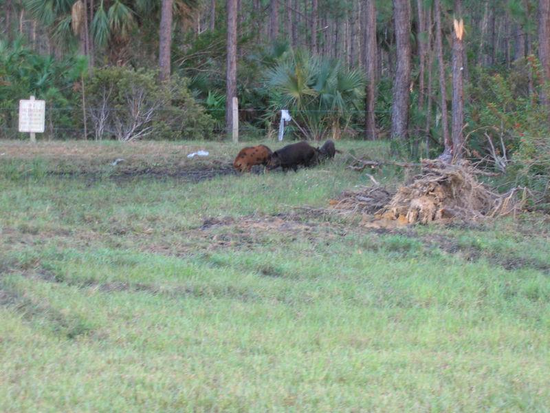 2005_11_05_Nature around SWF & FGCU-6