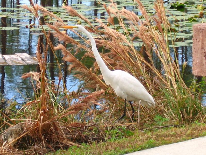 2005_11_05_Nature around SWF & FGCU-102