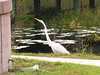 2005_11_05_Nature around SWF & FGCU-99