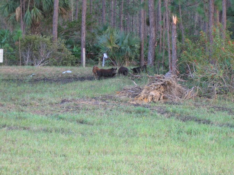 2005_11_05_Nature around SWF & FGCU-3