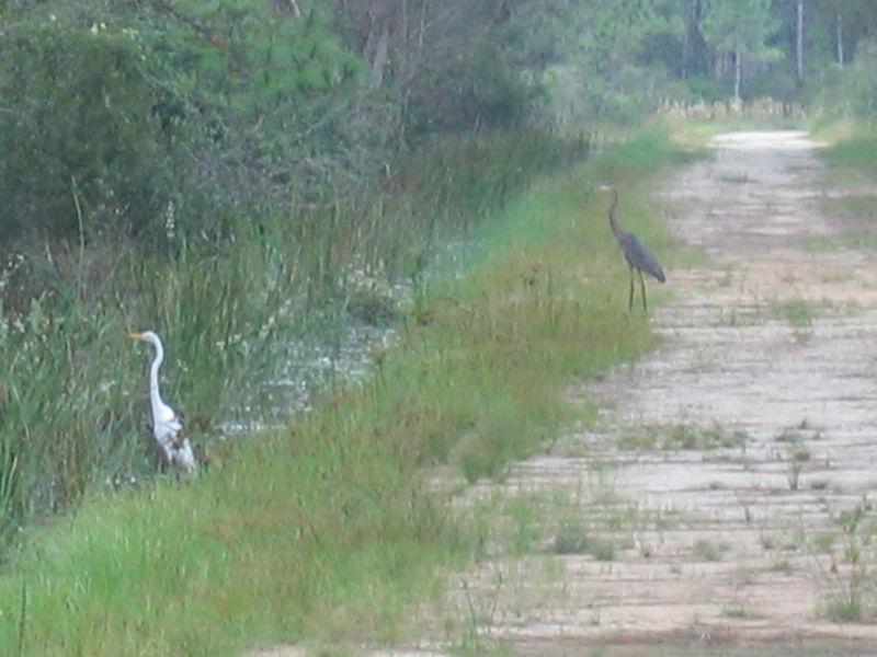 2005_11_05_Nature around SWF & FGCU-126