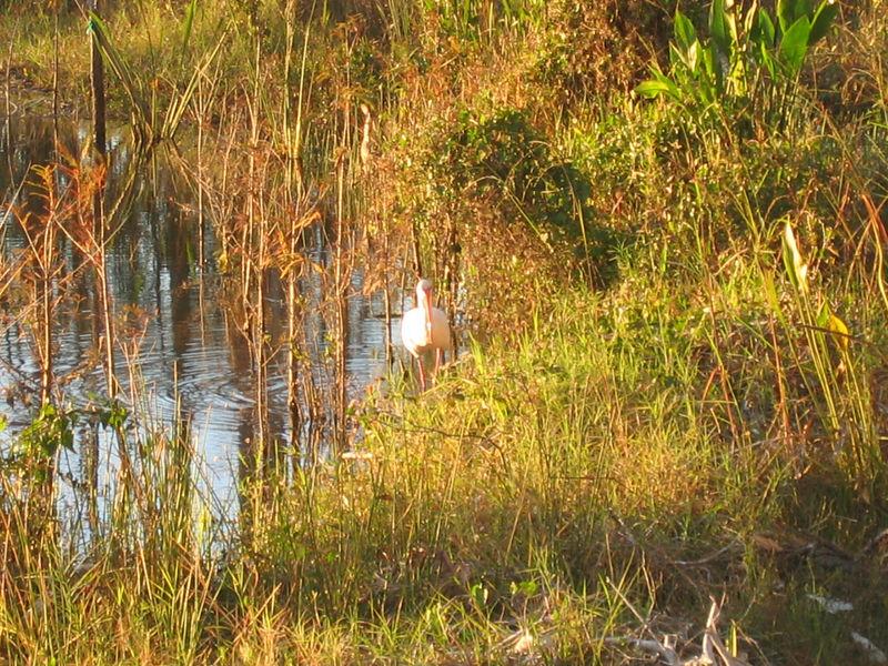 2005_11_05_Nature around SWF & FGCU-158