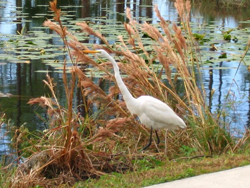 2005_11_05_Nature around SWF & FGCU-101