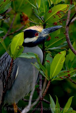 SW Florida Birds