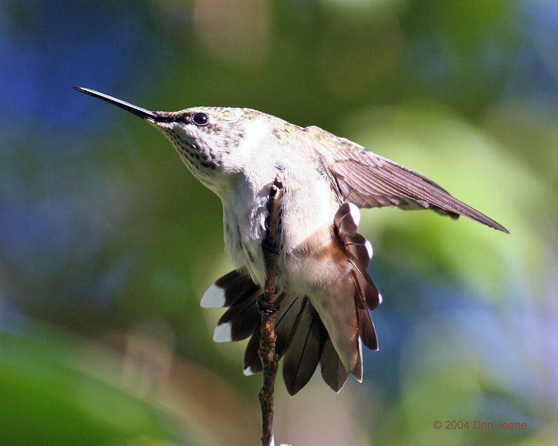 Southeast Texas Birds Djeane