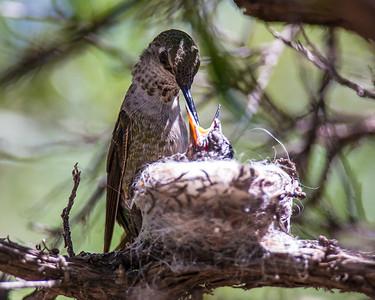 Tucson-20130426-0137