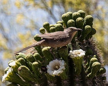 Tucson-20130426-0042