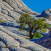 Lone Tree in white rock Arizona 2