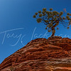 Zion National Park, Lone tree