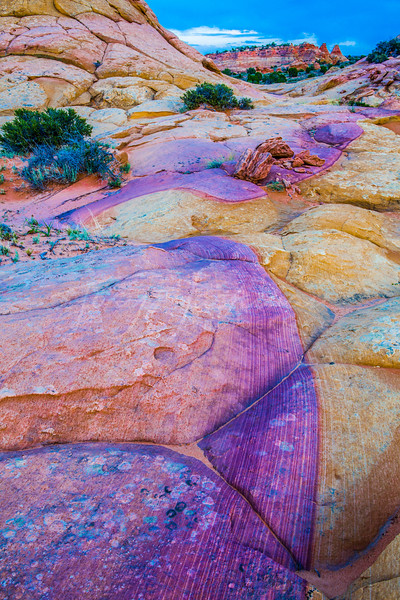 Vibrant South Coyote Buttes