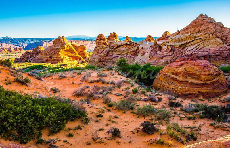 South Coyote Buttes Splendor