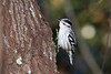 Black-and-white warbler...one of several we saw.
