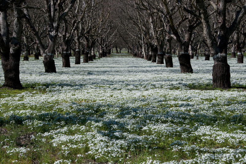 Spring Walnut Grove