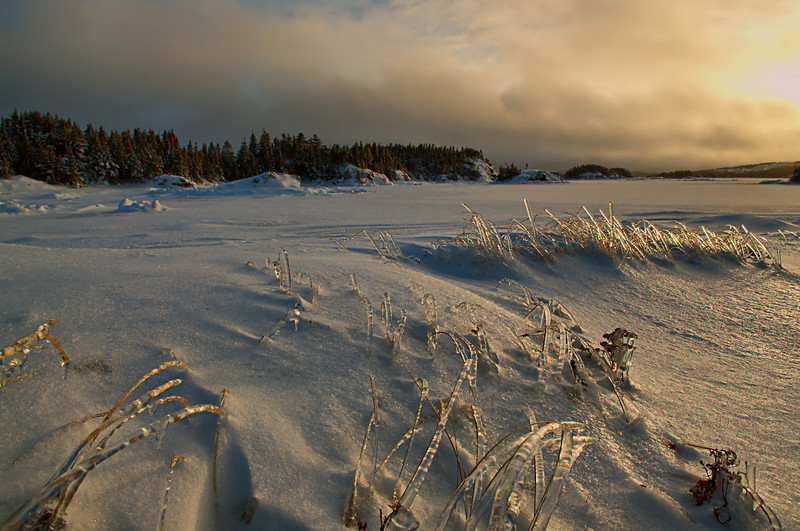 """Ice Grass"" near Too Good Arm, Newfoundland"