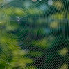 9-19 Spider Web-1