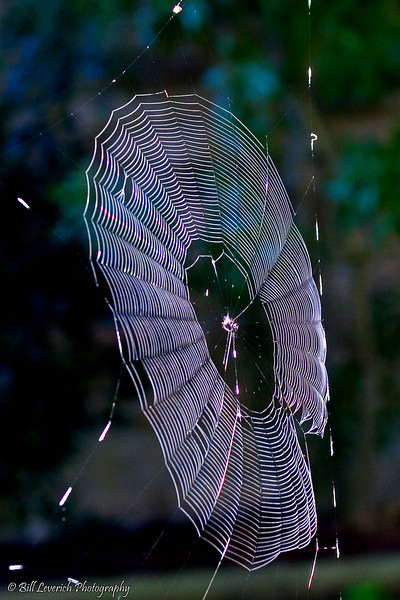 Morning dew on a freshly woven web