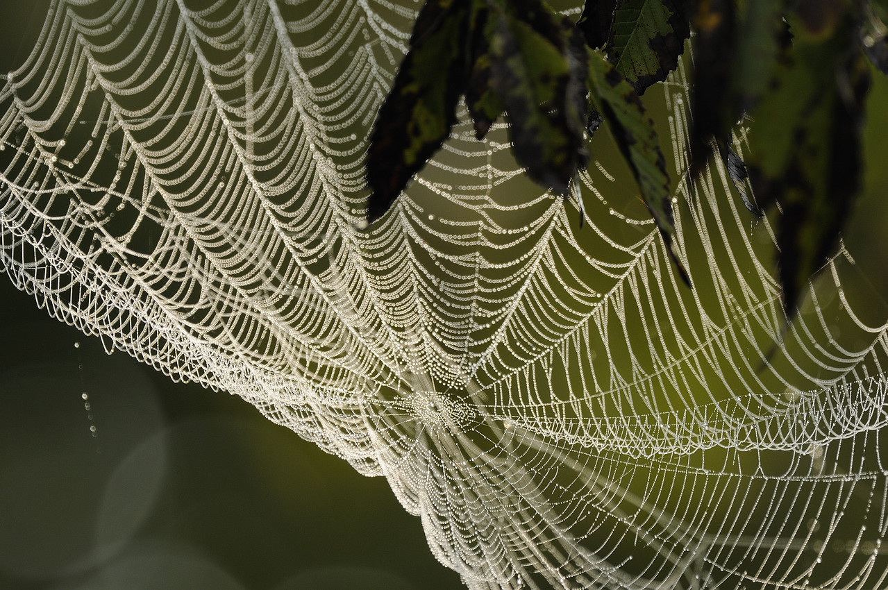 Spiderweb - Norfork River Morning (2)