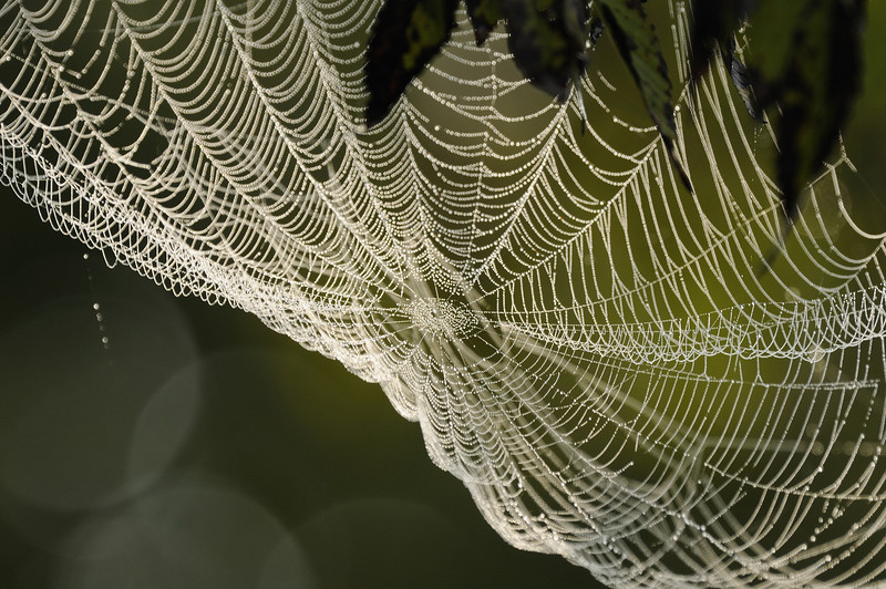 Spiderweb - Norfork River Morning (1)