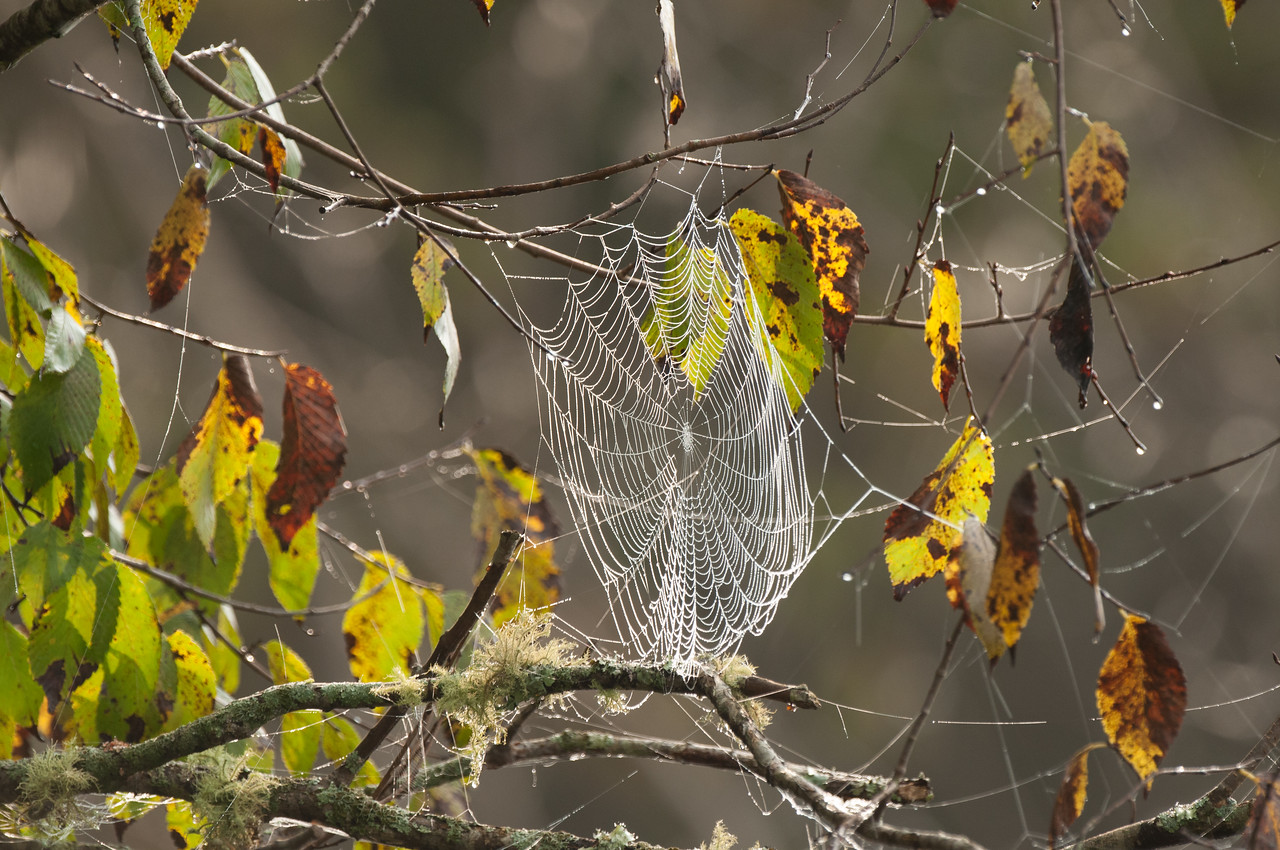 Spiderweb - Norfork River Morning (3)